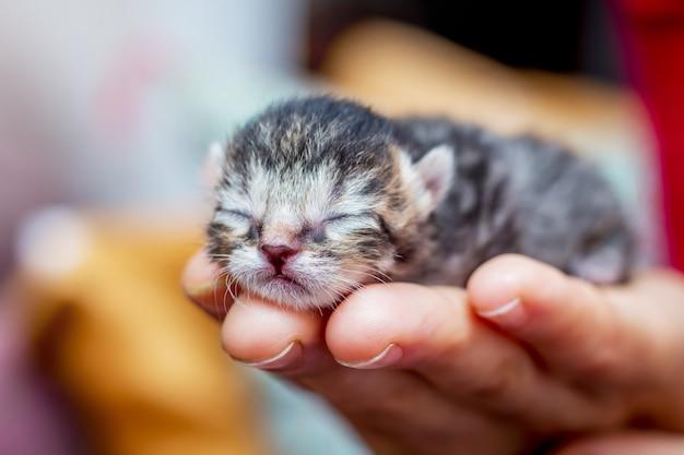 Mulher segura na mão um gatinho indefeso. manifestação de amor pelos animais. proteção confiável e segurança_