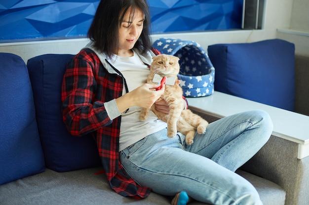 Mulher segura o gato ruivo britânico e penteia-o pelo pelo, a fêmea cuida do animal doméstico em casa com a luz do dia.