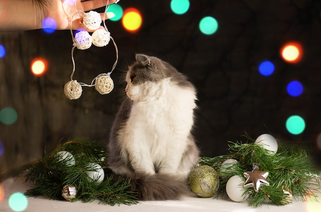 Mulher segura seu gato debaixo da árvore de natal. mulher com gato perto da árvore de natal em casa