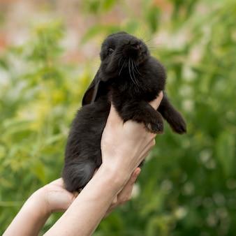 Mulher segura, um, coelho preto