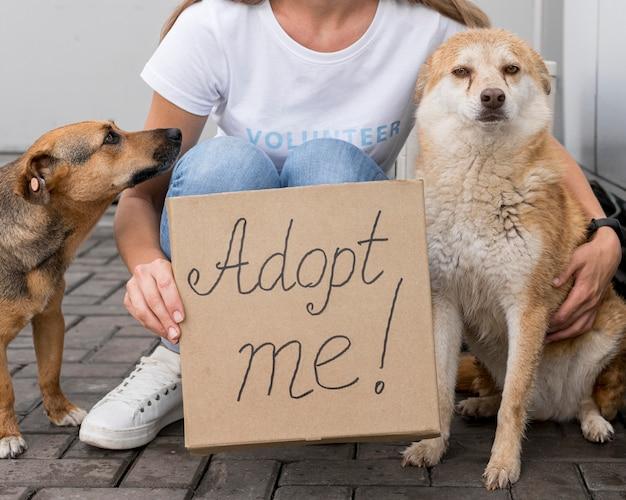 Mulher segurando cartaz de me adote enquanto está sentada ao lado de cachorros fofos
