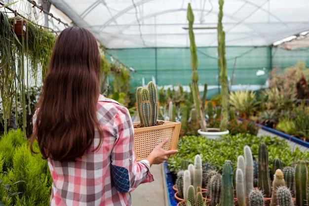 Mulher segurando cesta com cactus em estufa