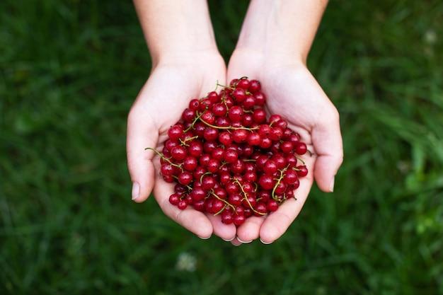 Mulher segurando frutas frescas de groselha nas mãos Foto Premium