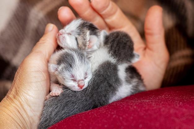 Mulher segurando gatinhos recém-nascidos nas mãos