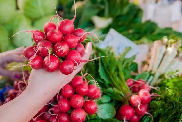 Mulher segurando rabanetes frescos. dieta, alimentação saudável e vida útil