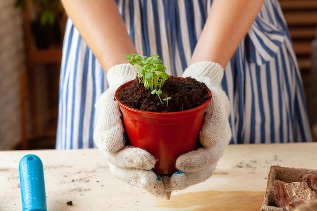 Mulher segurando um pote com um broto nas mãos, conceito de jardinagem