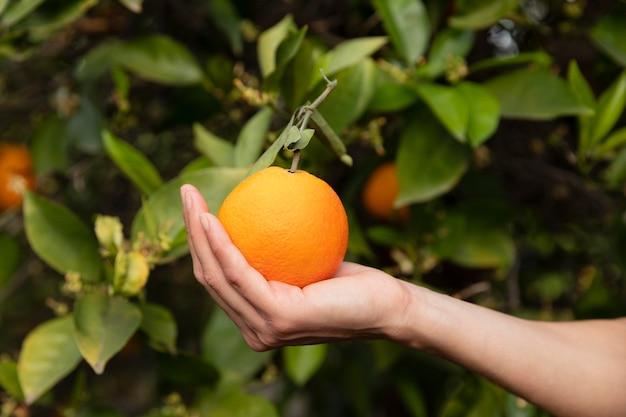 Mulher segurando uma laranja na mão