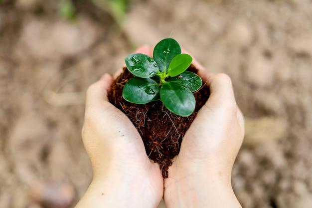 Mulher segurando uma muda com as duas mãos, plantar árvores ajudará a reduzir o aquecimento global. e adicionar oxigênio ao nosso mundo, o conceito de redução do aquecimento global.