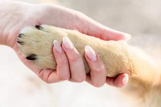 Mulher segurando uma pata de cachorro na mão