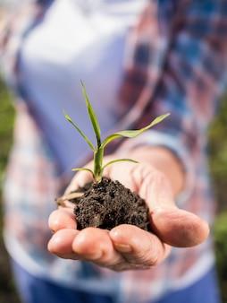 Mulher segurando uma pequena planta na mão