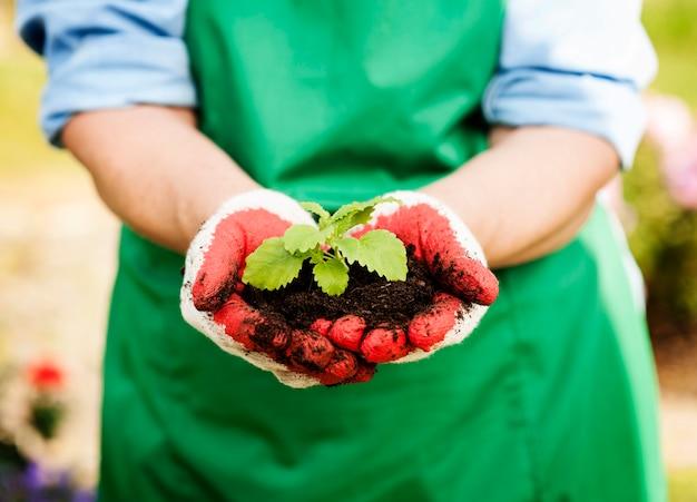 Mulher segurando uma pequena planta nas mãos