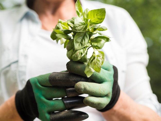 Mulher segurando uma plantinha nas mãos dela