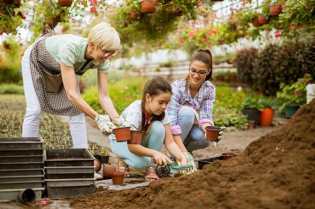 Mulher sênior, jovem mulher e menina plantar flores em vasos no greengarden