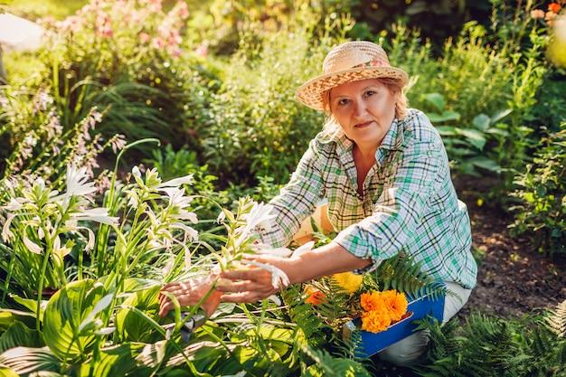 Mulher sênior que recolhe flores no jardim. idoso, aposentado, mulher, corte, flores, com, poda