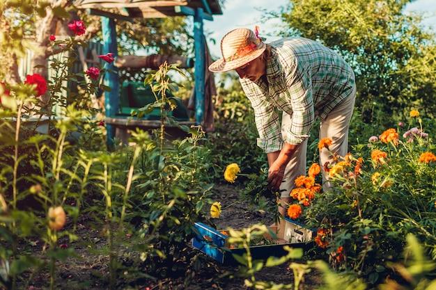 Mulher sênior que recolhe flores no jardim. o corte de meia idade da mulher floresce fora usando o podador.