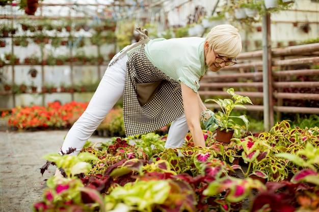 Mulher sênior trabalhando no jardim de flores