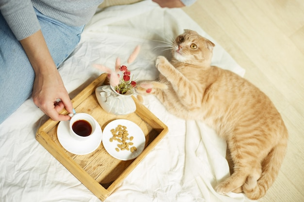 Mulher sentada na cama e bebe café, gato alimentando durante a luz do sol da manhã, café da manhã na cama. mulher com animal doméstico,