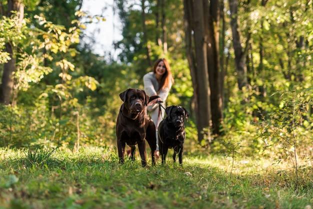 Mulher sorridente, andar, com, cachorros, parque