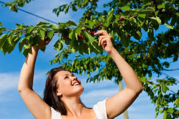 Mulher sorridente, colhendo cerejas da árvore