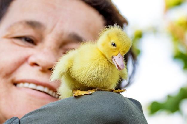 Mulher sorridente com um pequeno patinho amarelo. patos em crescimento