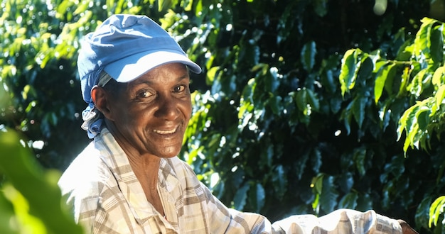 Mulher sorridente do brasil colhendo sementes de café vermelho na plantação de café.