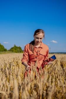 Mulher tecnóloga agrônoma com computador tablet no campo de trigo, verificando a qualidade e o crescimento