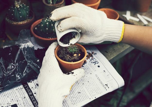 Mulher, tendendo, plantas, estufa