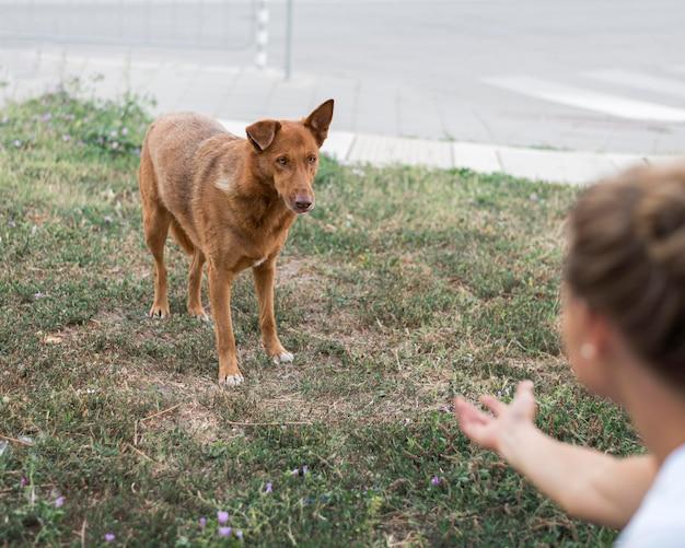 Mulher tentando chamar o cão de resgate de abrigo de adoção