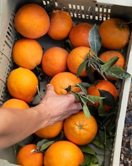 Mulher tirando uma laranja de uma caixa
