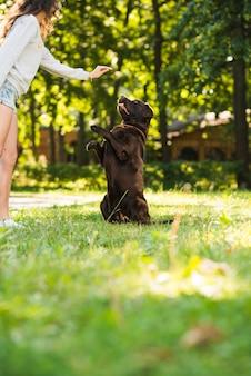 Mulher, tocando, dela, cão, parque