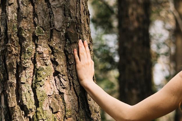 Mulher, tocar, árvore, com, mão
