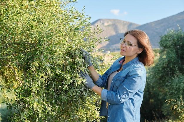 Mulher trabalhadora inspecionando oliveiras nas montanhas, fazenda ecológica de oliveiras, dia ensolarado de outono