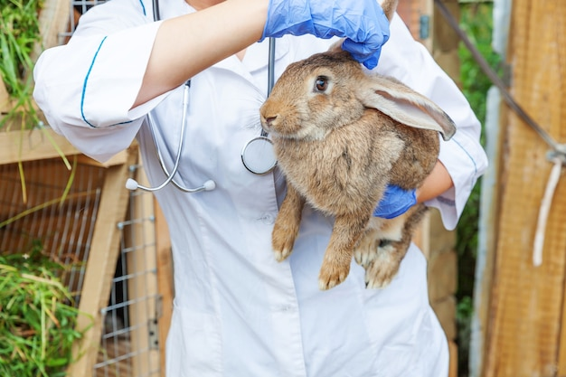 Mulher veterinária com estetoscópio segurando e examinando coelho no rancho
