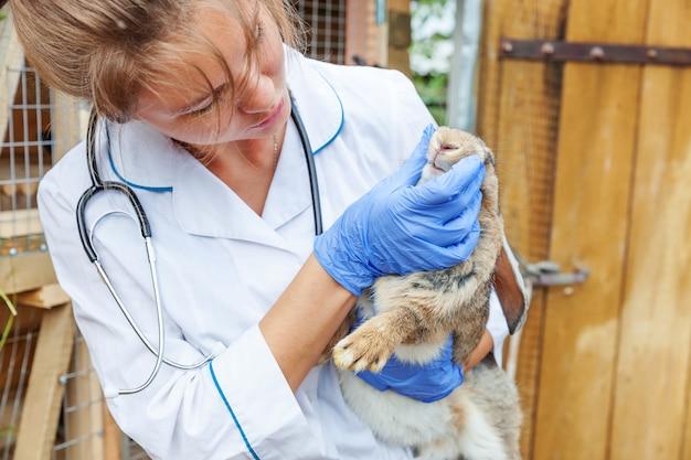Mulher veterinária nova feliz com o estetoscópio que guarda e que examina o coelho no rancho. coelho nas mãos do veterinário para check-up na fazenda natural eco. cuidado animal e conceito de agricultura ecológica.