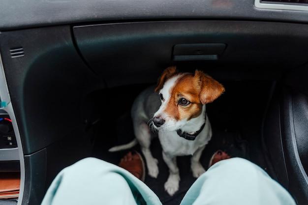 Mulher viajando de carro com seu lindo cachorro pequeno