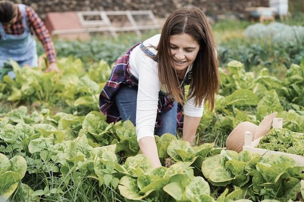 Mulheres agricultoras trabalhando em uma estufa enquanto colhem plantas de alface - foco no rosto da mulher