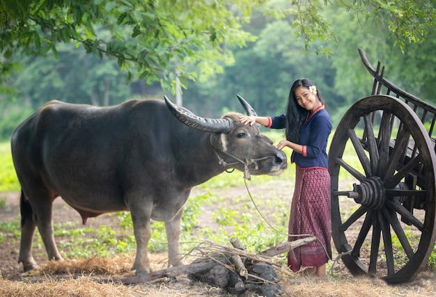 Mulheres asiáticas que vestem o vestido tradicional tailandês e o búfalo.