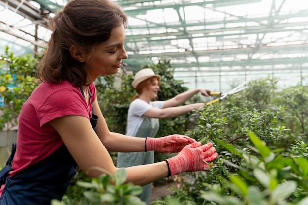 Mulheres cuidando de suas plantas em uma estufa