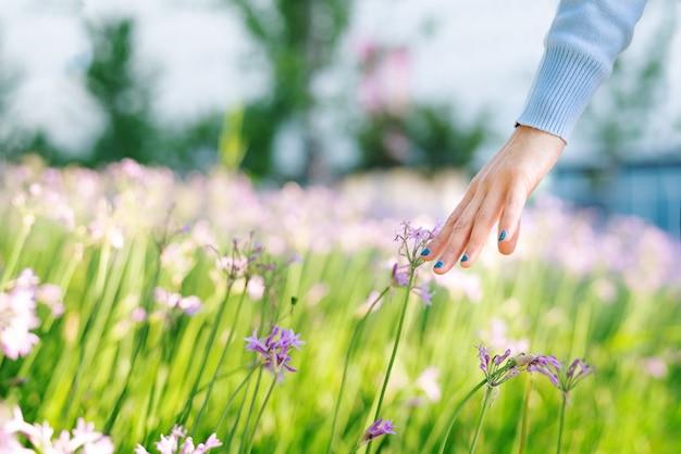 Mulheres e flores no campo. mão de mulheres tocando a flor roxa com espaço de cópia