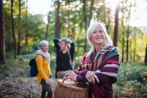 Mulheres idosas amigas com cesta caminhando ao ar livre na floresta.