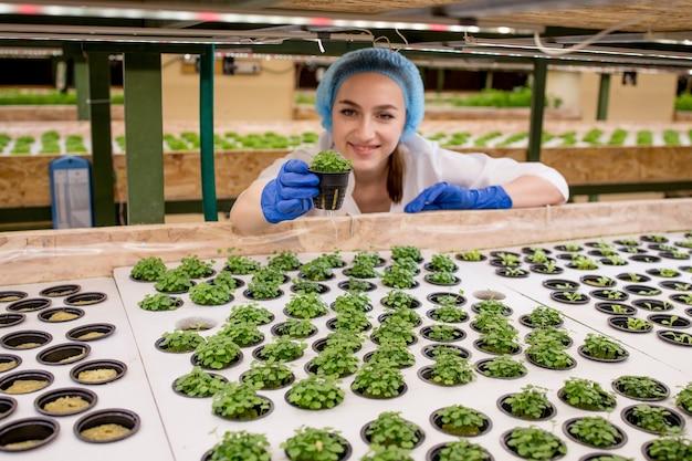 Mulheres jardineiras mantêm a vegetação na fazenda hidropônica e observam meticulosamente a vegetação antes da entrega ao cliente.