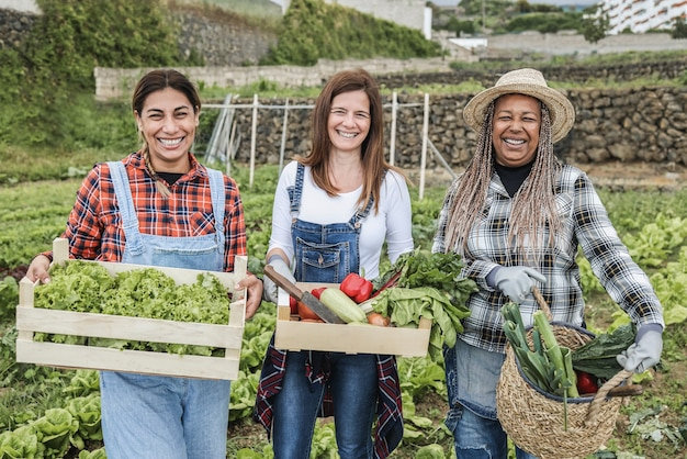 Mulheres multirraciais segurando caixas de madeira com vegetais orgânicos frescos - foco principal nos rostos