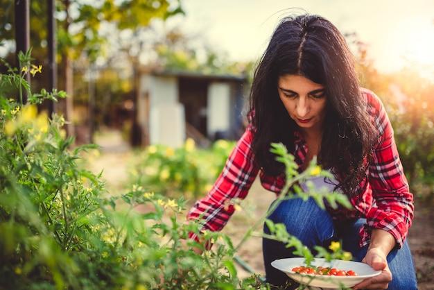 Mulheres pegando tomates frescos no jardim