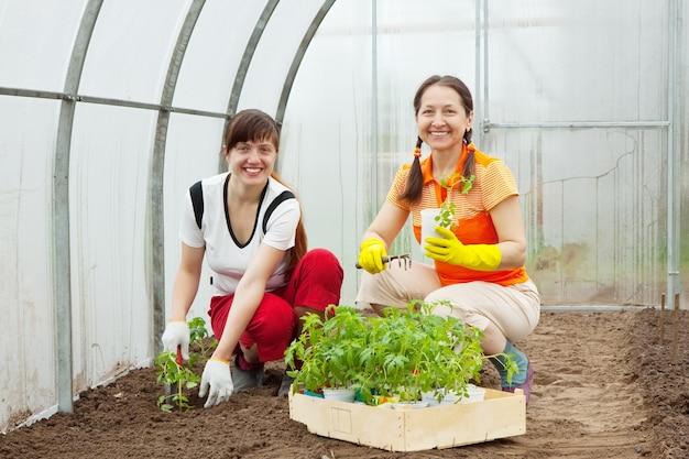 Mulheres plantando mudas de tomate