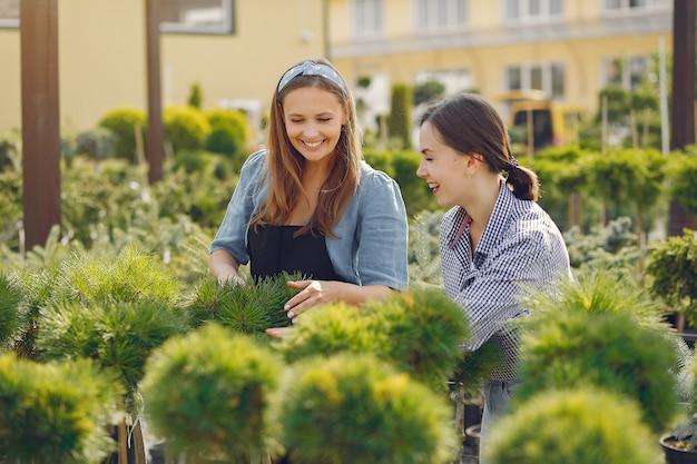 Mulheres que trabalham em uma estufa com árvores verdes