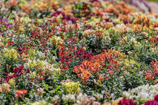 Multi flor com fundo desfocado