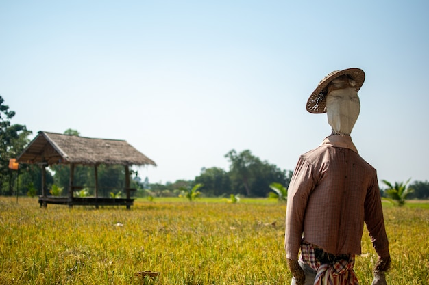 Multidão de medo em pé no campo de arroz verde com cabana