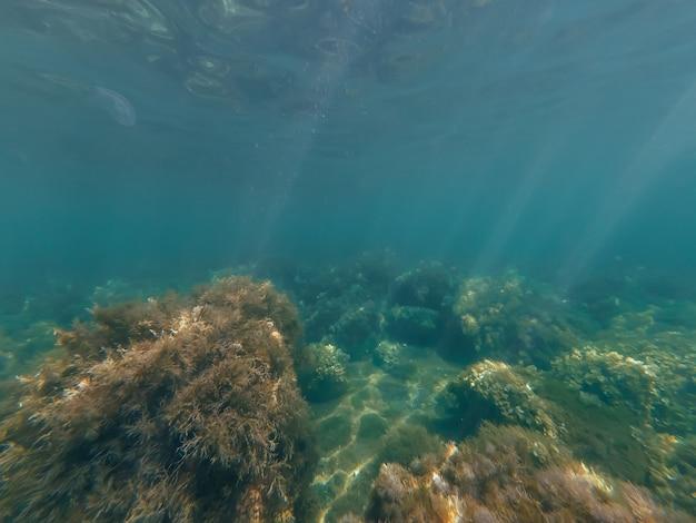 Mundo subaquático no mar com água transparente azul clara