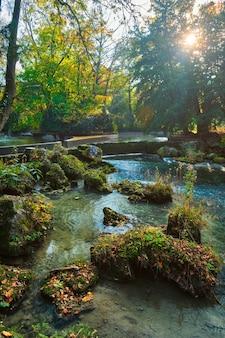 Munich english garden englischer garten park no outono munchen bavaria alemanha Foto Premium