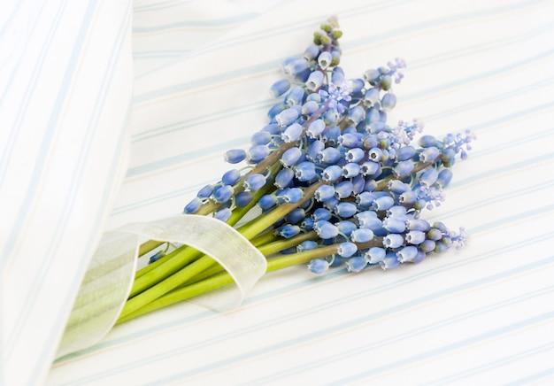 Muscari azul